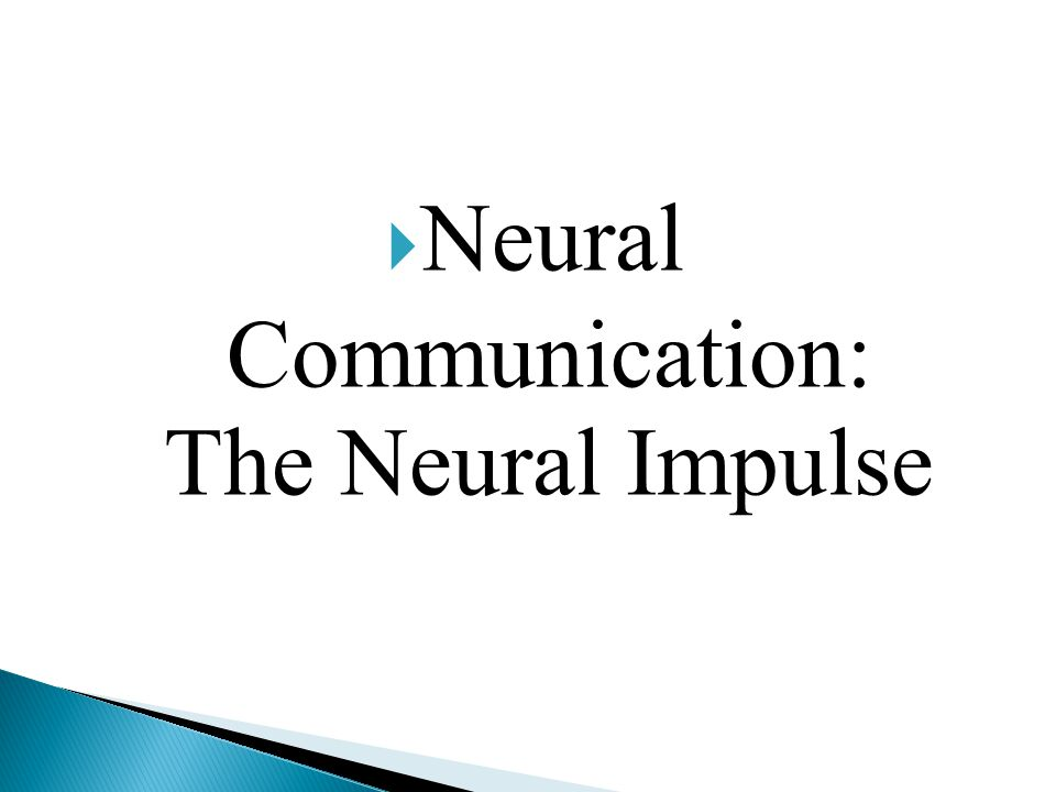 Neural Communication: The Neural Impulse