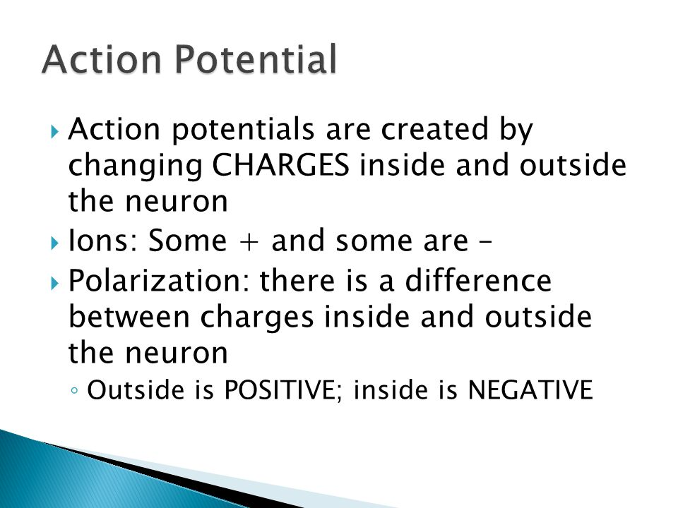 Action Potential Action potentials are created by changing CHARGES inside and outside the neuron.