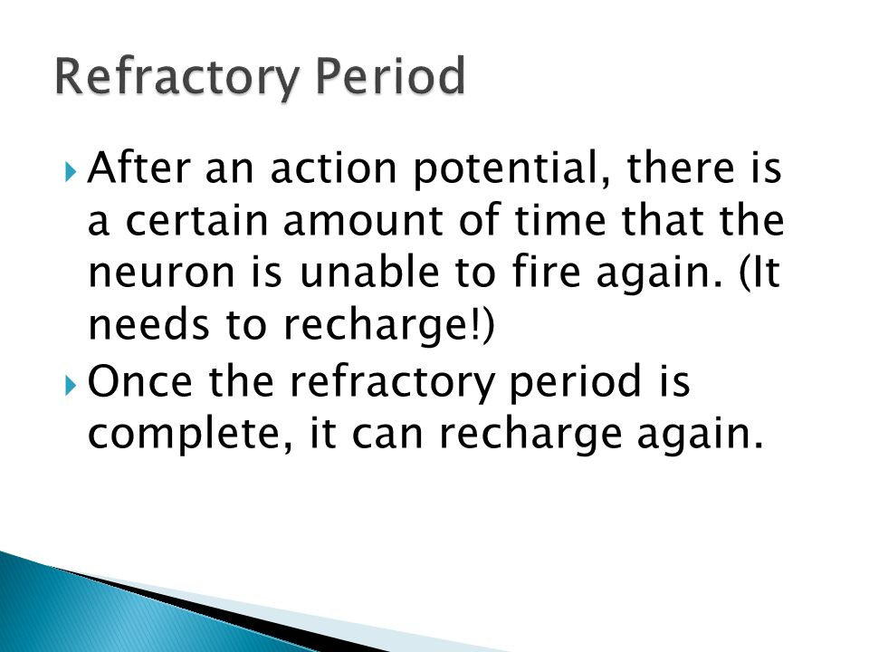 Refractory Period After an action potential, there is a certain amount of time that the neuron is unable to fire again. (It needs to recharge!)