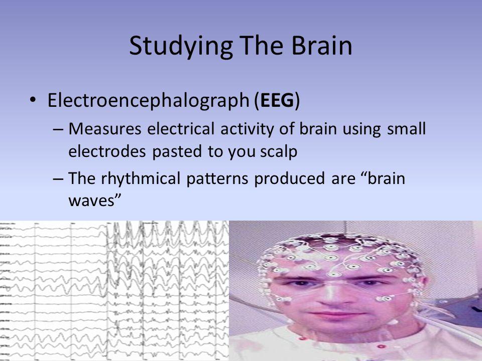 Studying The Brain Electroencephalograph (EEG)