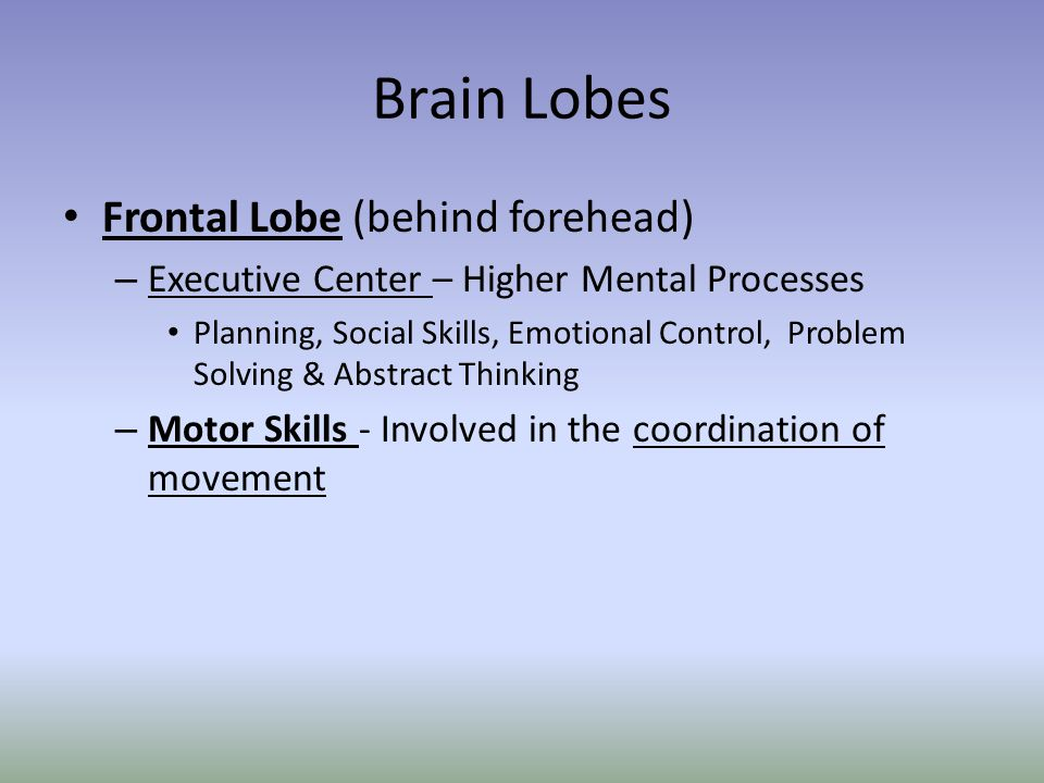 Brain Lobes Frontal Lobe (behind forehead)
