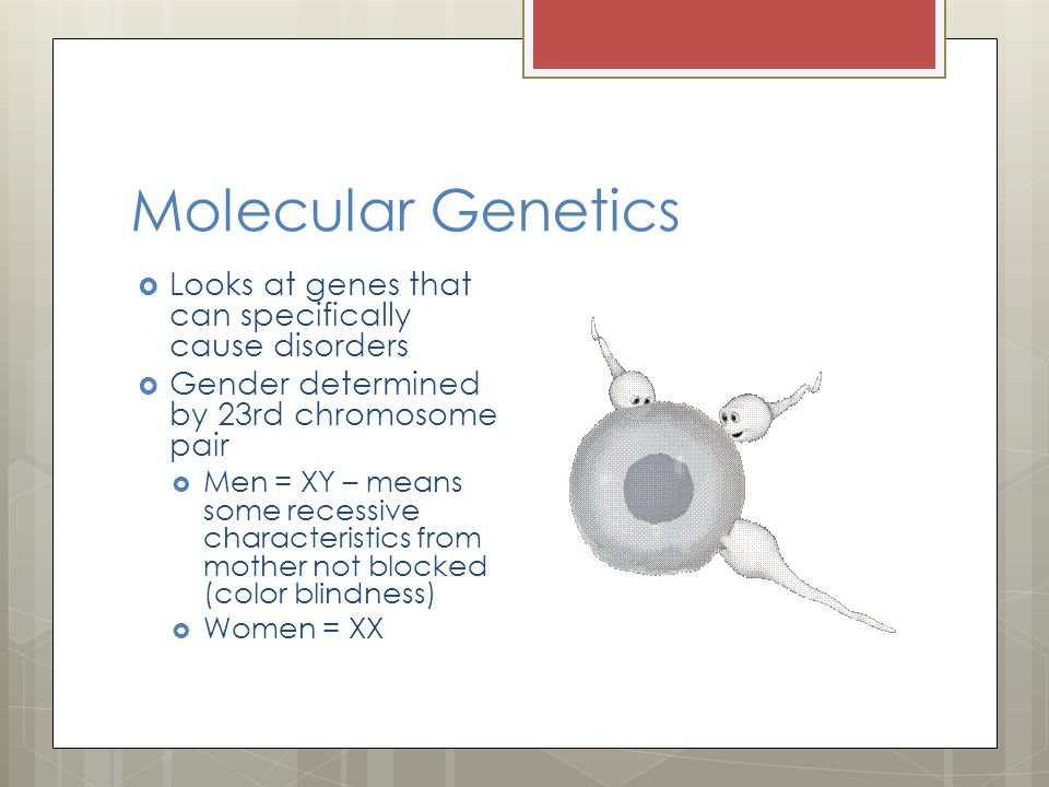 Molecular Genetics Looks at genes that can specifically cause disorders. Gender determined by 23rd chromosome pair.