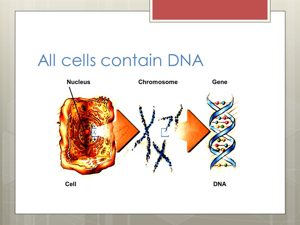 All cells contain DNA