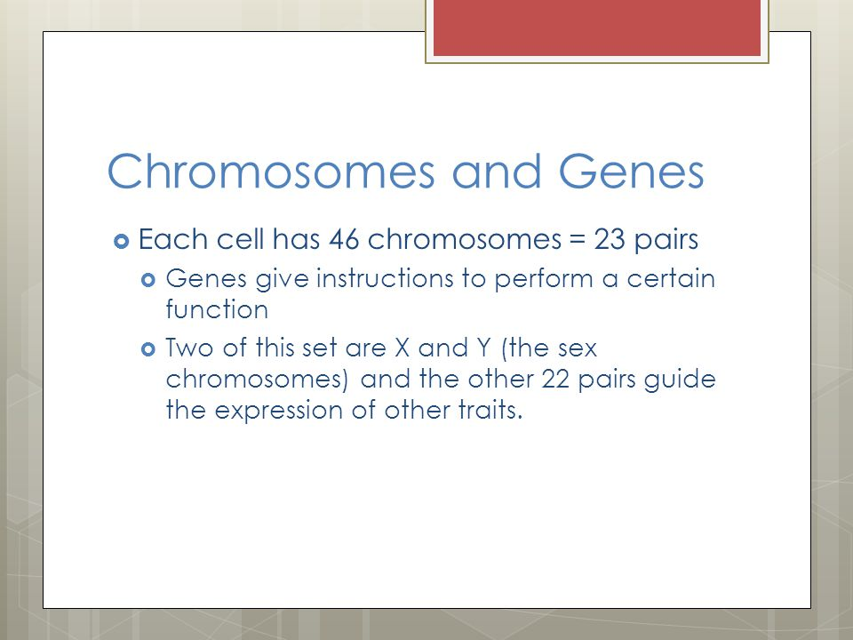 Chromosomes and Genes Each cell has 46 chromosomes = 23 pairs