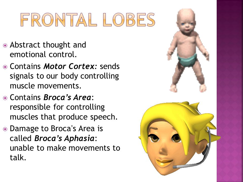 Frontal Lobes Abstract thought and emotional control.