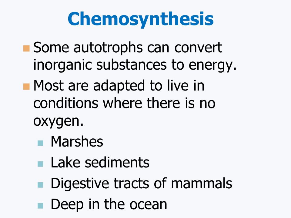 Photosynthesis vs. Chemosynthesis: What's the Difference?