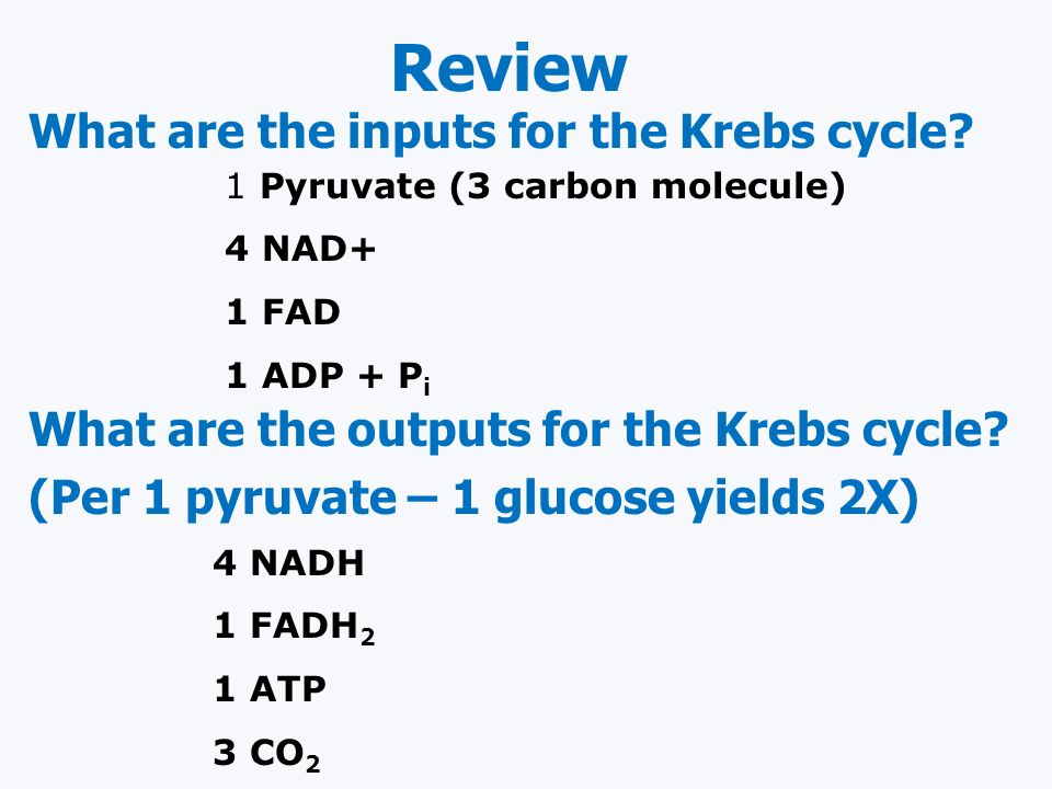 Review What are the inputs for the Krebs cycle