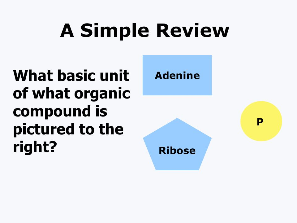 A Simple Review Adenine Ribose P What basic unit of what organic compound is pictured to the right