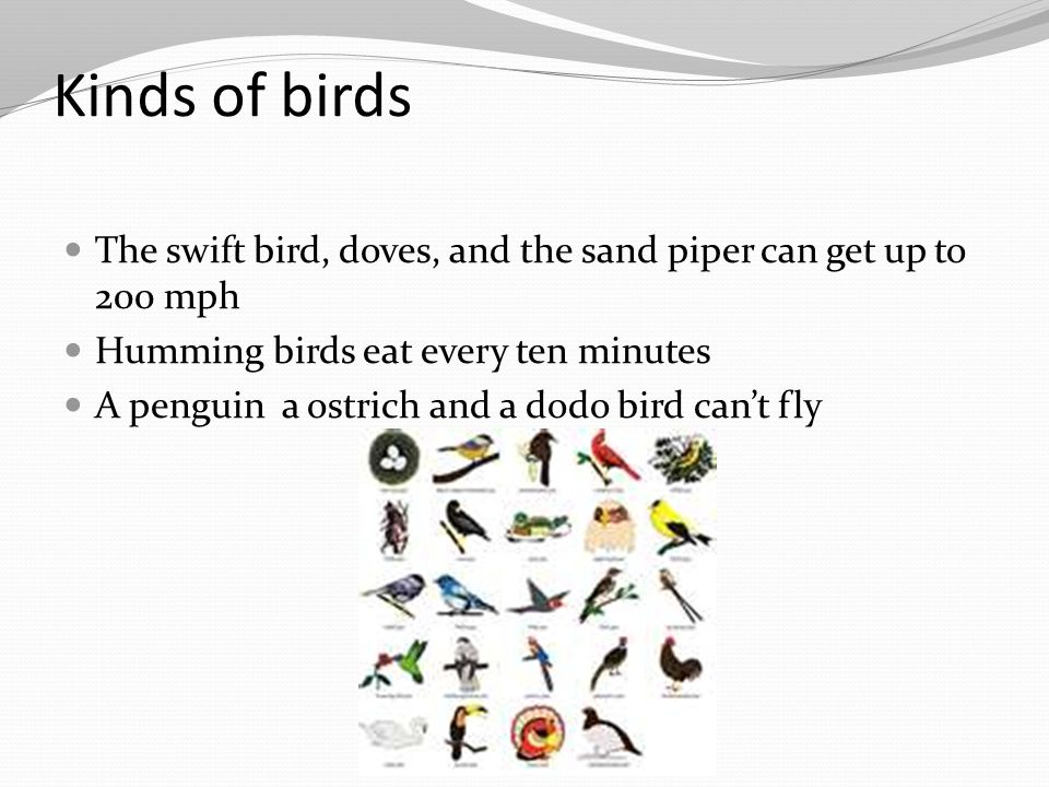 Kinds of birds The swift bird, doves, and the sand piper can get up to 200 mph. Humming birds eat every ten minutes.