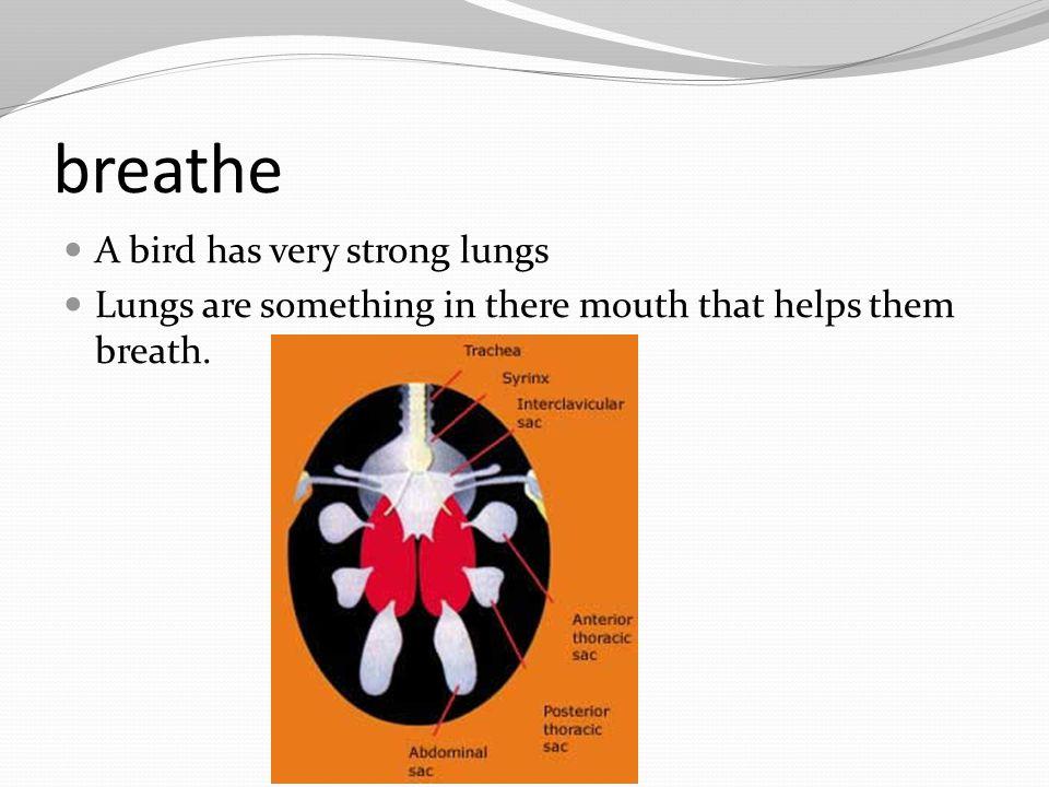 breathe A bird has very strong lungs
