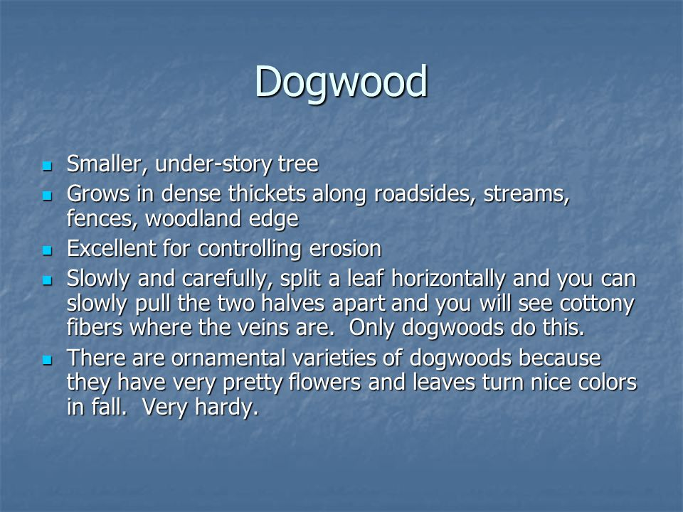 Dogwood Smaller, under-story tree
