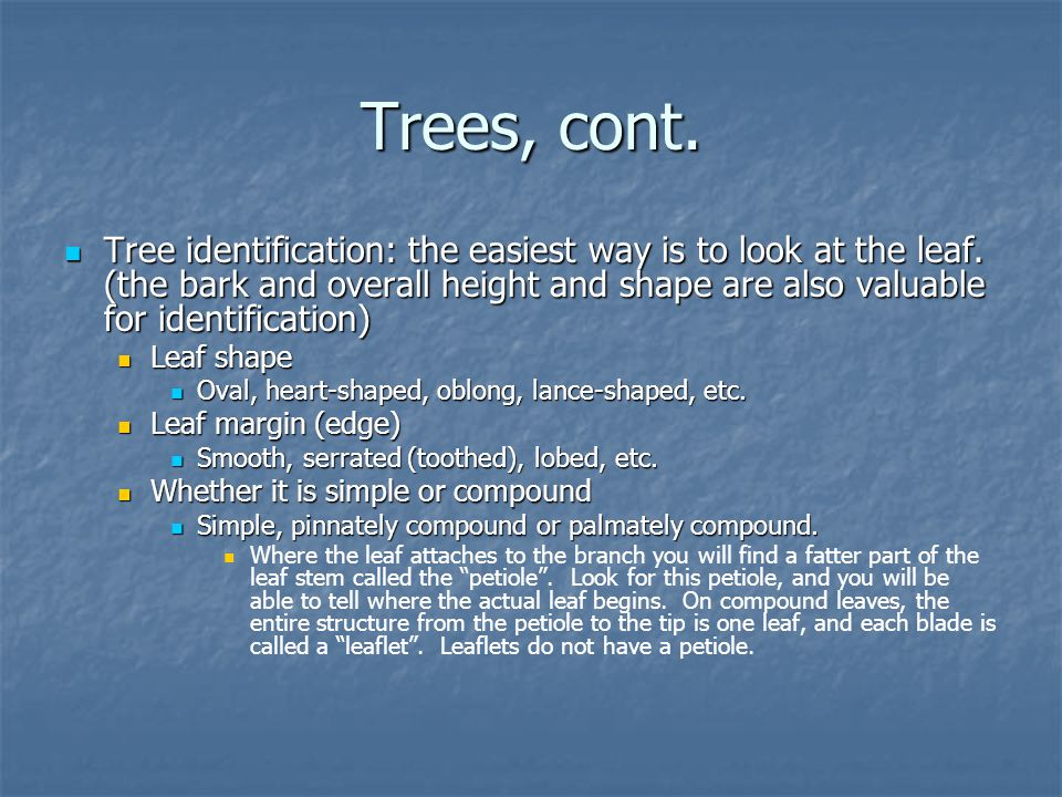 Trees, cont.