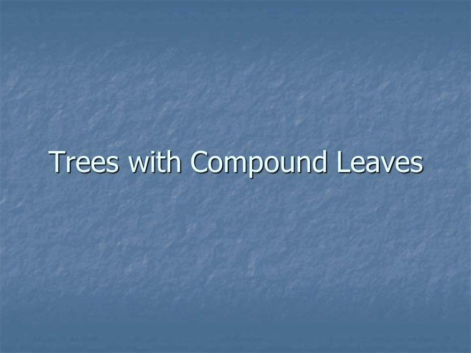 Trees with Compound Leaves