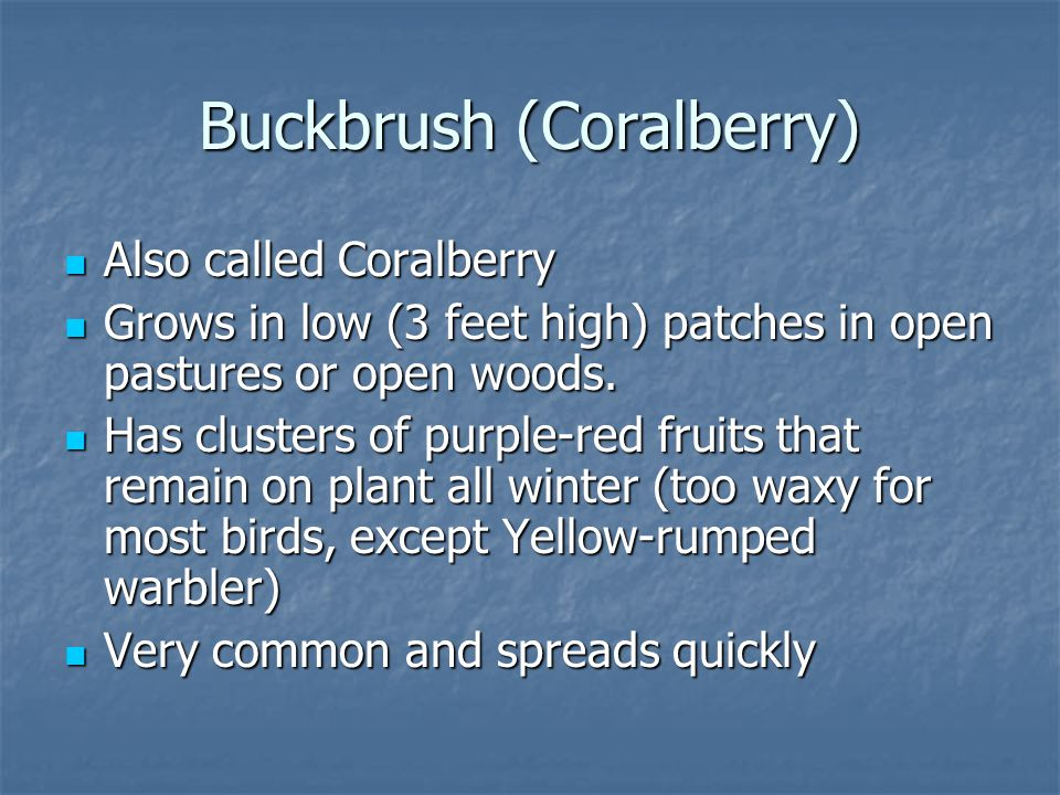 Buckbrush (Coralberry)