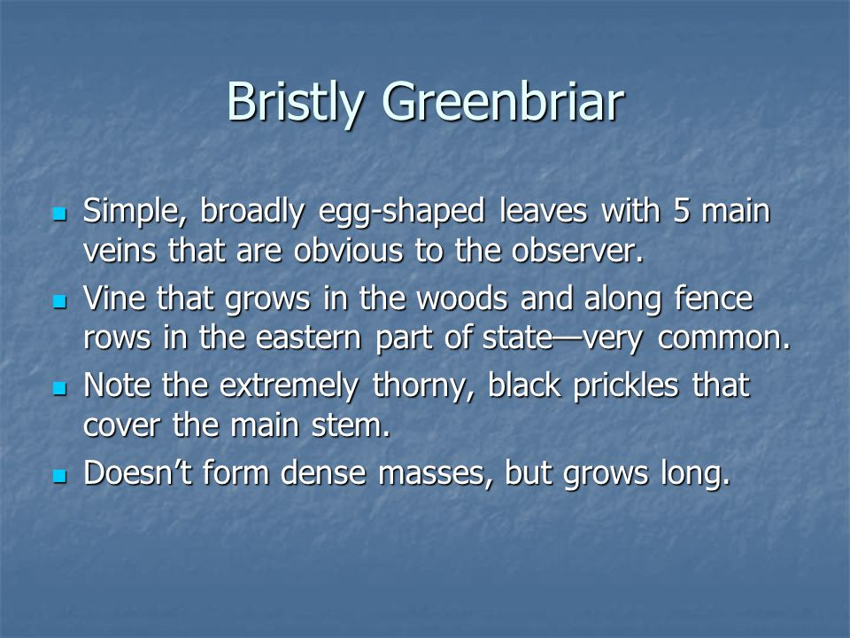 Bristly Greenbriar Simple, broadly egg-shaped leaves with 5 main veins that are obvious to the observer.