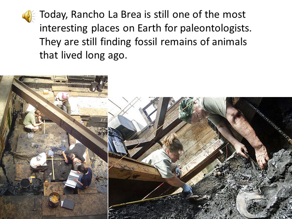 Today, Rancho La Brea is still one of the most interesting places on Earth for paleontologists. They are still finding fossil remains of animals that lived long ago.