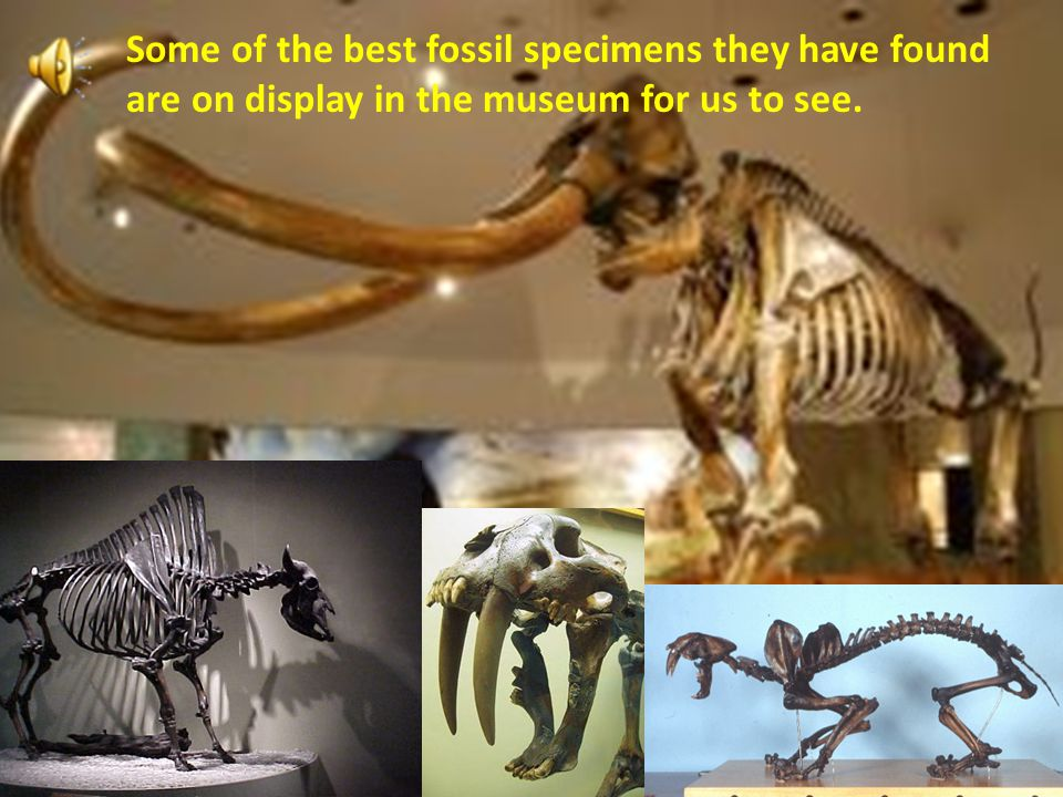 Some of the best fossil specimens they have found are on display in the museum for us to see.