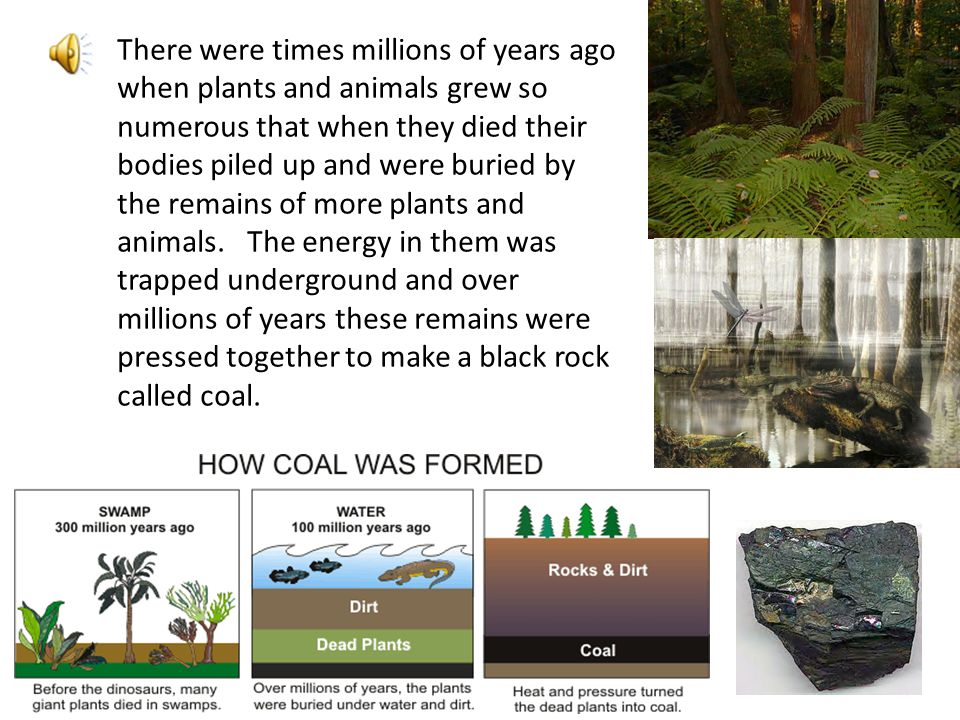There were times millions of years ago when plants and animals grew so numerous that when they died their bodies piled up and were buried by the remains of more plants and animals. The energy in them was trapped underground and over millions of years these remains were pressed together to make a black rock called coal.