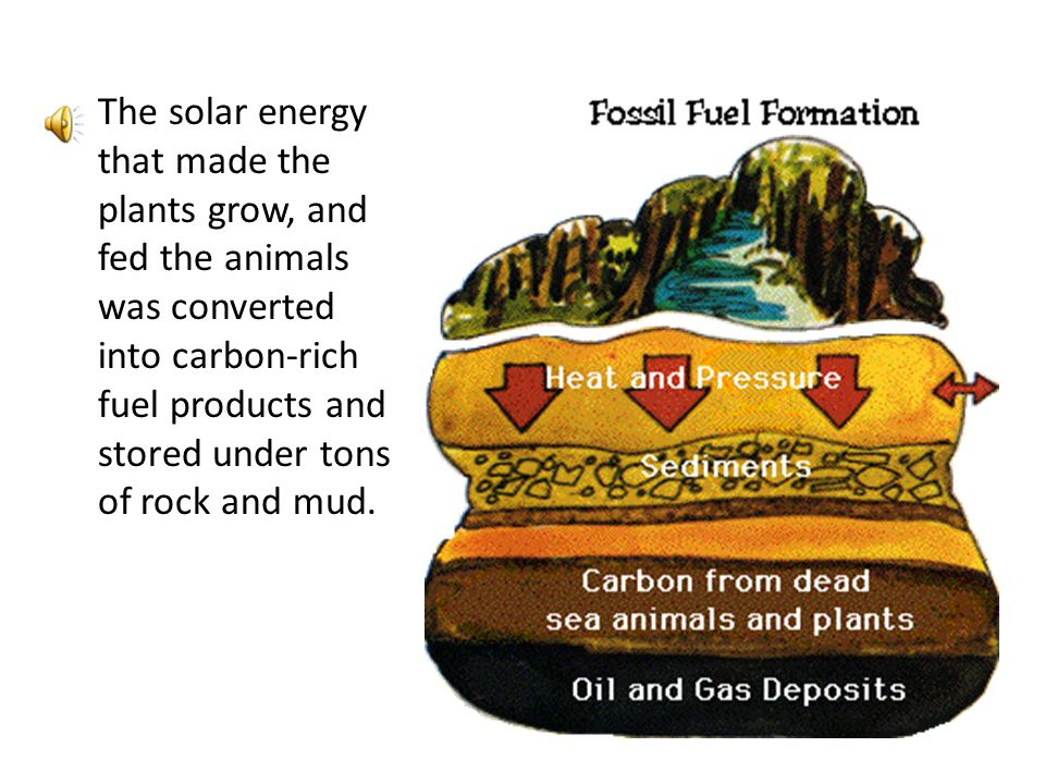 The solar energy that made the plants grow, and fed the animals was converted into carbon-rich fuel products and stored under tons of rock and mud.