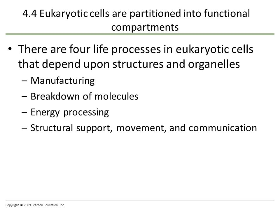4.4 Eukaryotic cells are partitioned into functional compartments