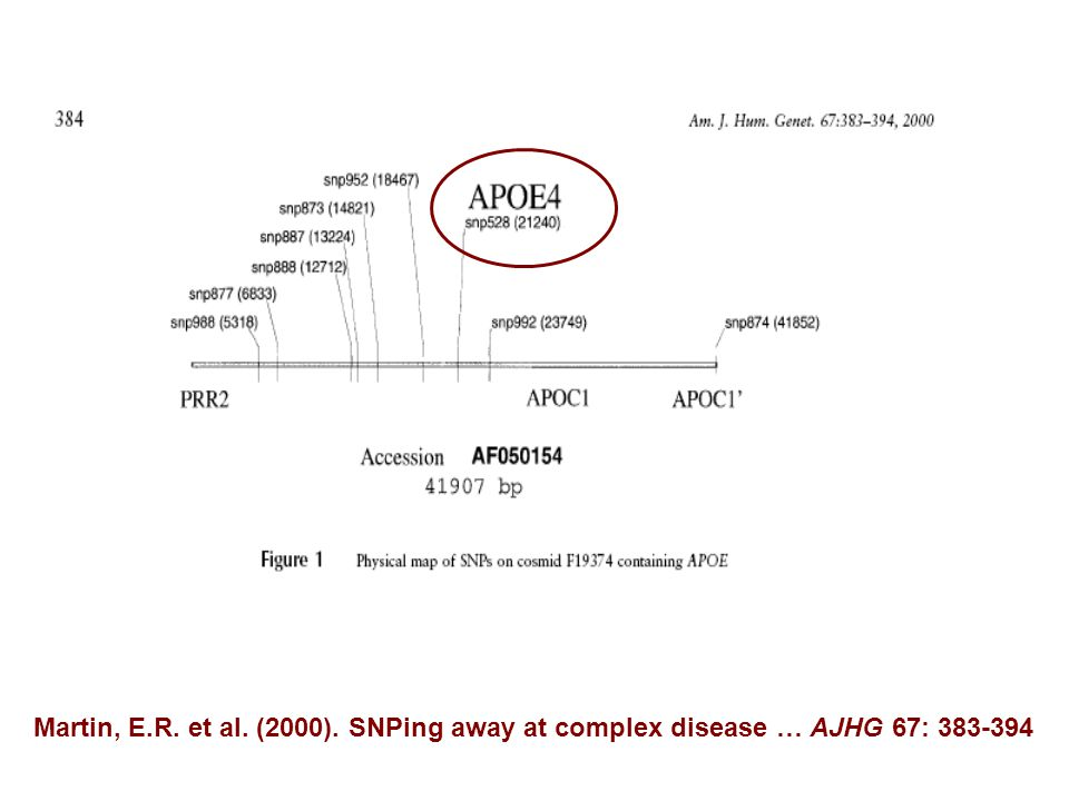 Martin, E.R. et al. (2000). SNPing away at complex disease … AJHG 67: 383-394