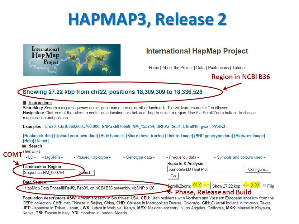 HAPMAP3, Release 2 Region in NCBI B36 COMT Phase, Release and Build
