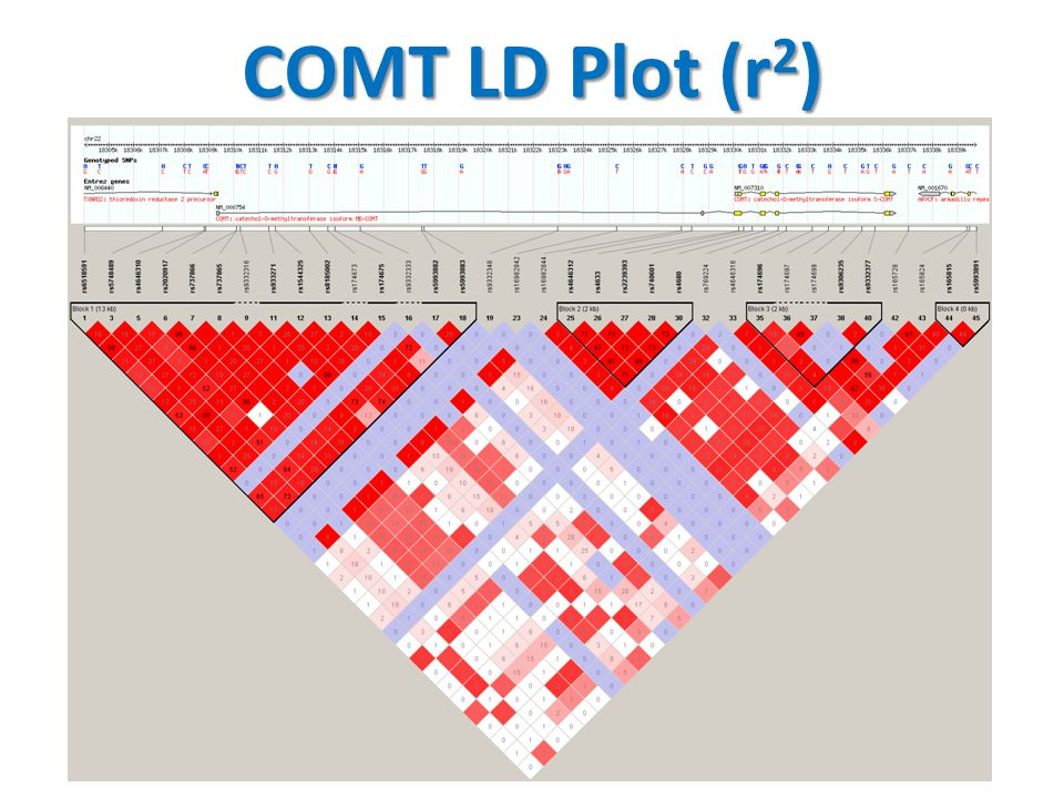 COMT LD Plot (r2)