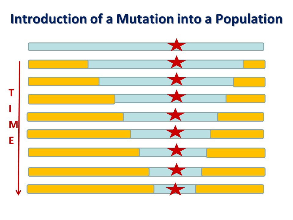Introduction of a Mutation into a Population