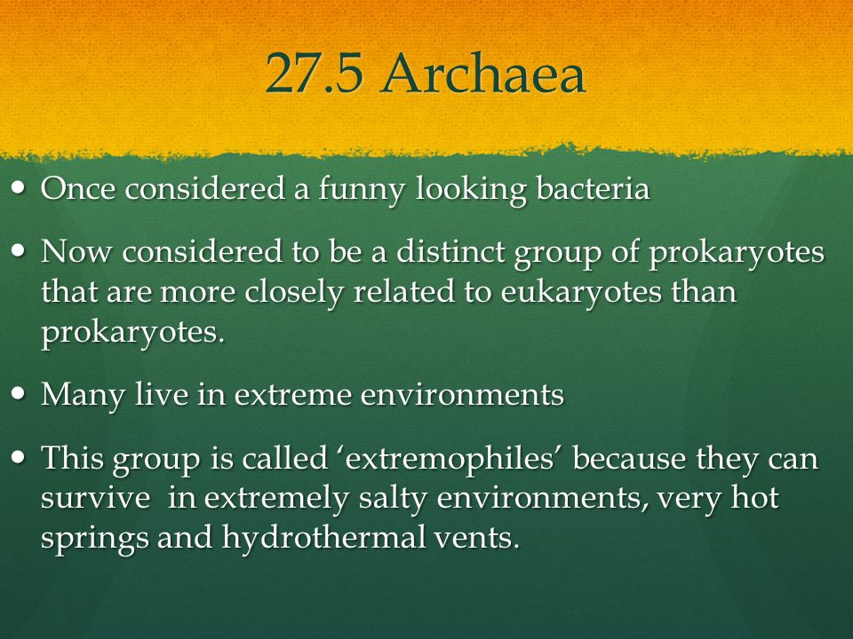 27.5 Archaea Once considered a funny looking bacteria