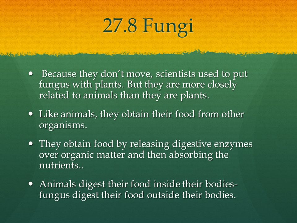 27.8 Fungi Because they don't move, scientists used to put fungus with plants. But they are more closely related to animals than they are plants.