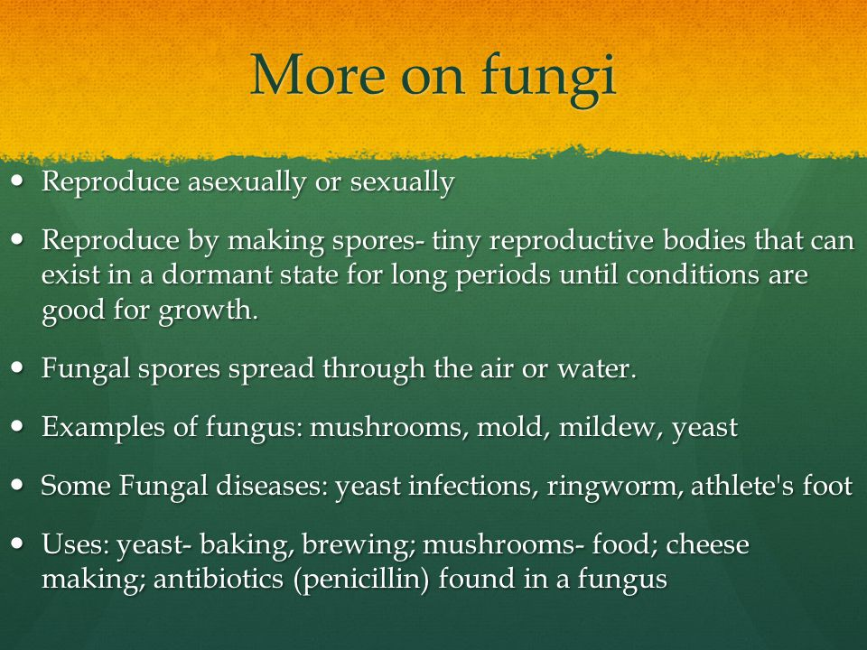 More on fungi Reproduce asexually or sexually