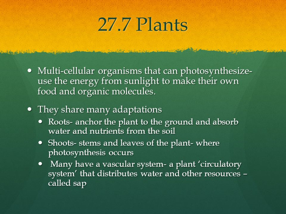 27.7 Plants Multi-cellular organisms that can photosynthesize- use the energy from sunlight to make their own food and organic molecules.
