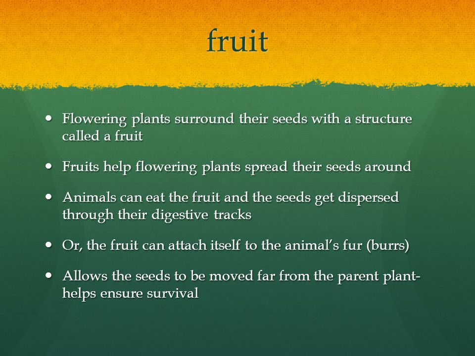 fruit Flowering plants surround their seeds with a structure called a fruit. Fruits help flowering plants spread their seeds around.