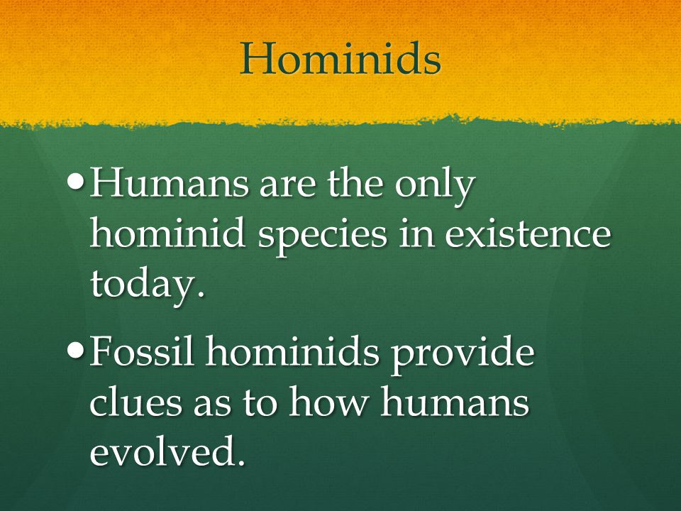 Hominids Humans are the only hominid species in existence today.