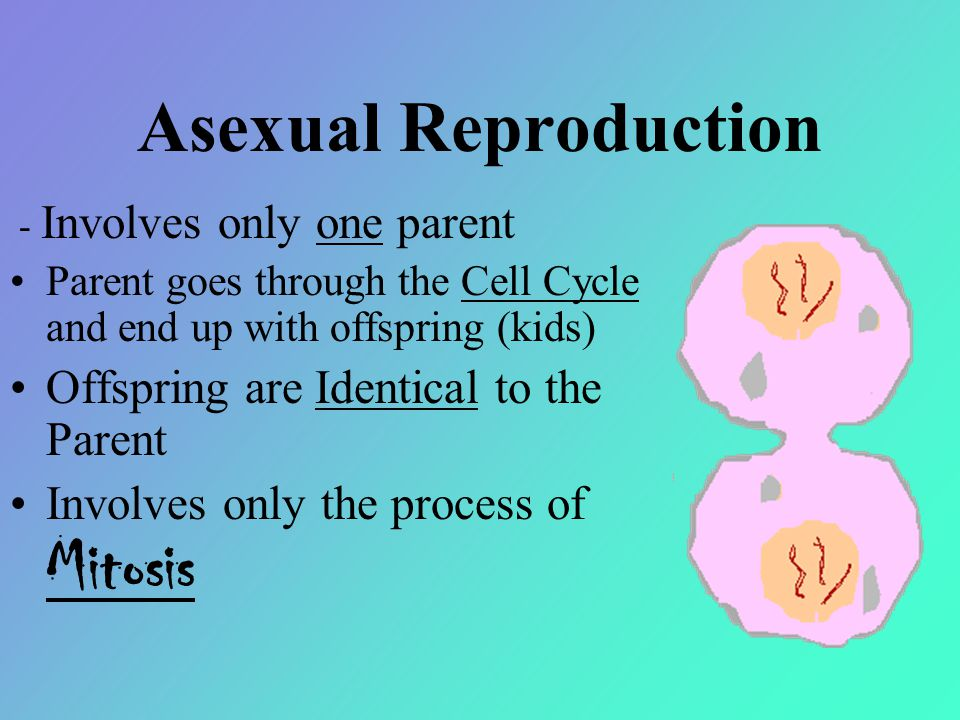 Asexual Reproduction Offspring are Identical to the Parent