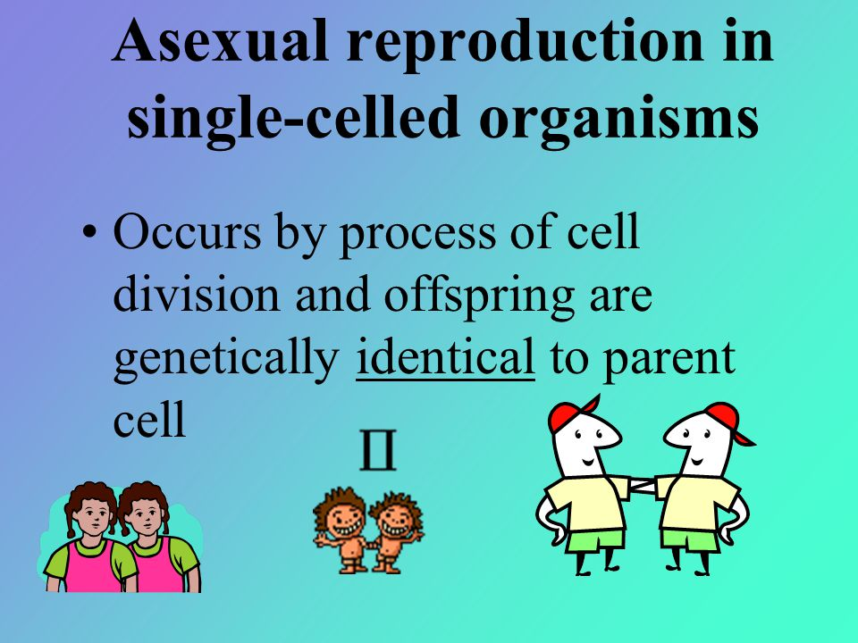 Asexual reproduction in single-celled organisms