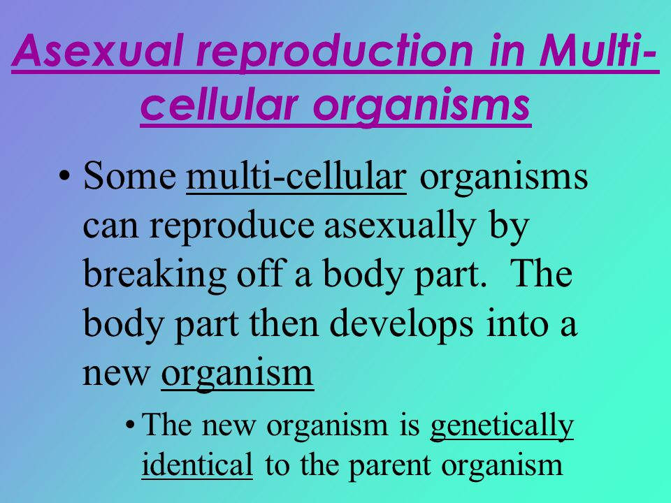 Asexual reproduction in Multi-cellular organisms