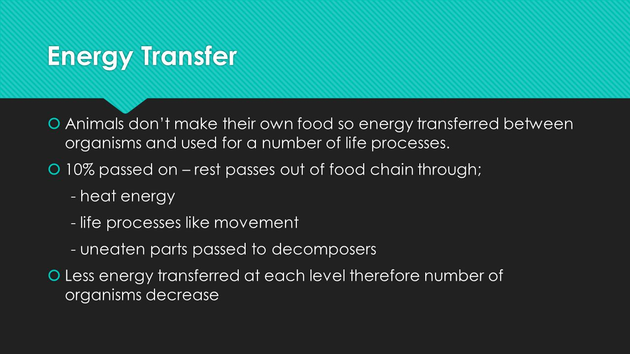 Energy Transfer Animals don't make their own food so energy transferred between organisms and used for a number of life processes.