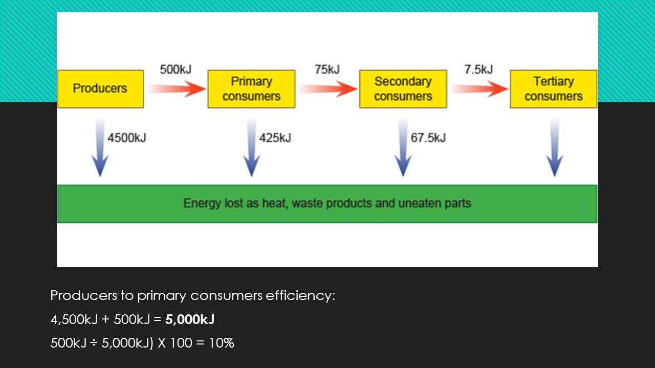 Producers to primary consumers efficiency: 4,500kJ + 500kJ = 5,000kJ 500kJ ÷ 5,000kJ) X 100 = 10%
