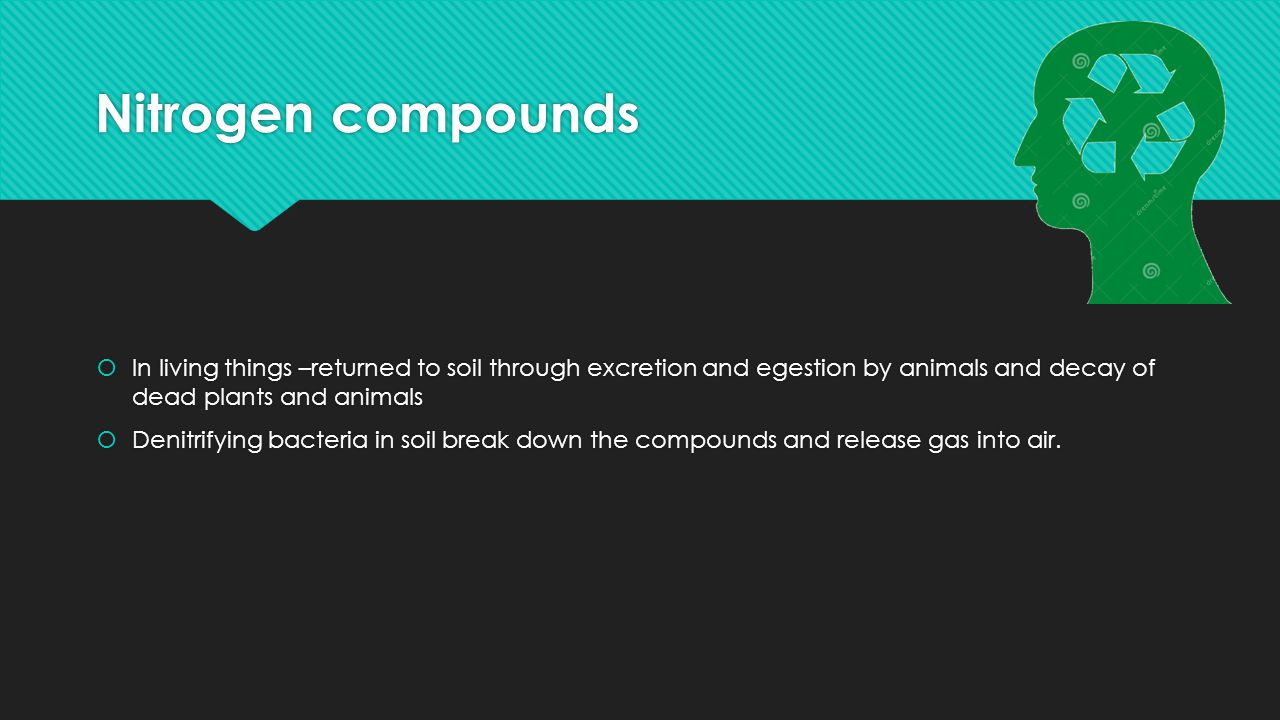 Nitrogen compounds In living things –returned to soil through excretion and egestion by animals and decay of dead plants and animals.