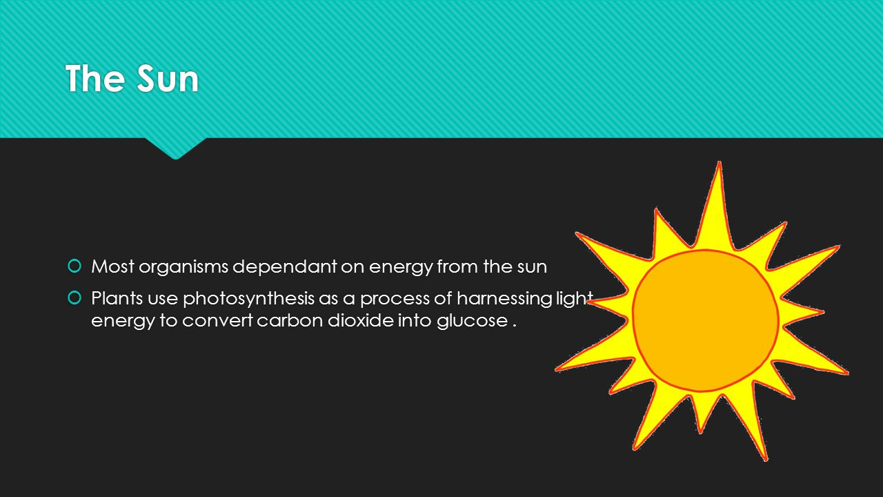 The Sun Most organisms dependant on energy from the sun