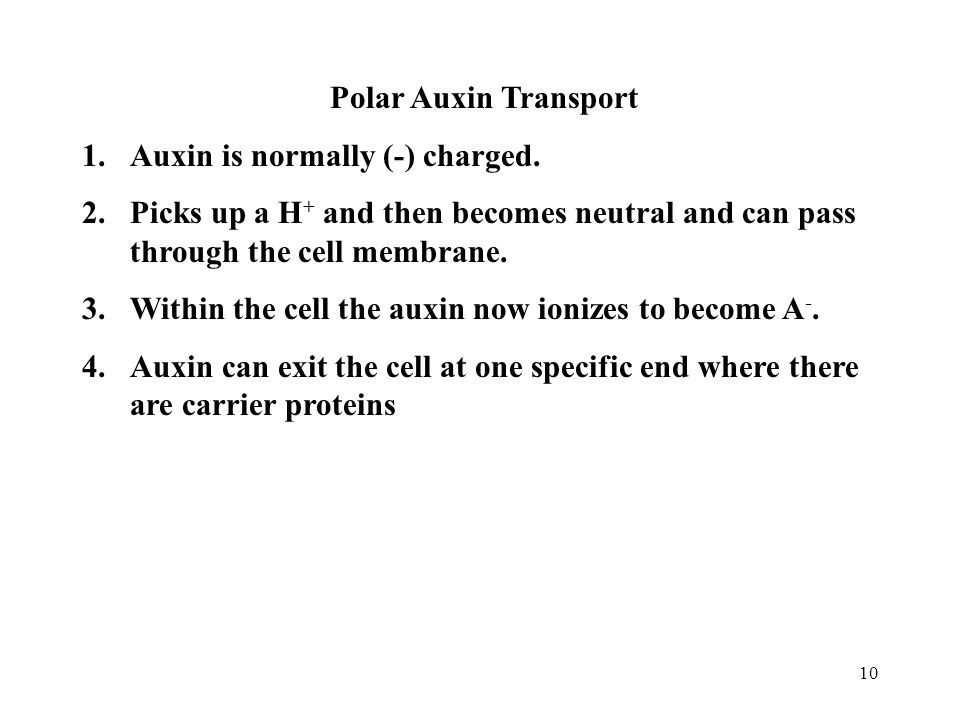 Polar Auxin Transport Auxin is normally (-) charged. Picks up a H+ and then becomes neutral and can pass through the cell membrane.