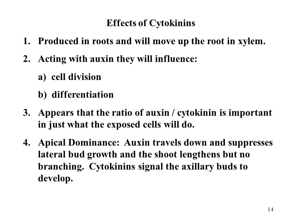Effects of Cytokinins Produced in roots and will move up the root in xylem. Acting with auxin they will influence: