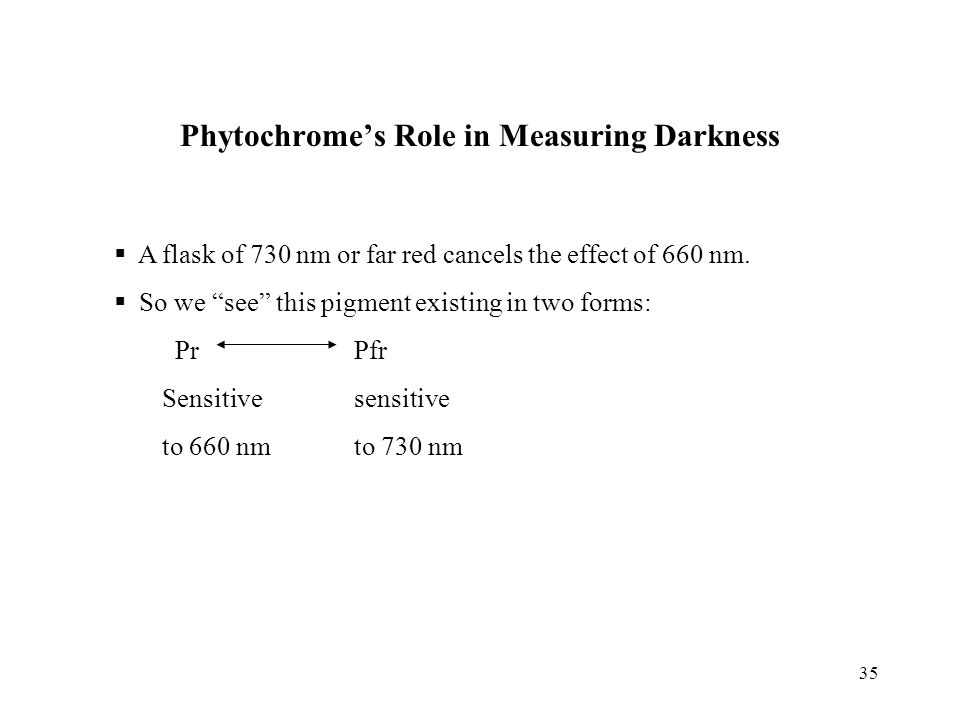 Phytochrome's Role in Measuring Darkness