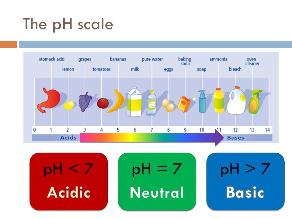 The pH scale Acidic pH < 7 Neutral pH = 7 Basic pH > 7