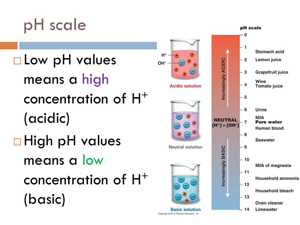 pH scale Low pH values means a high concentration of H+ (acidic)