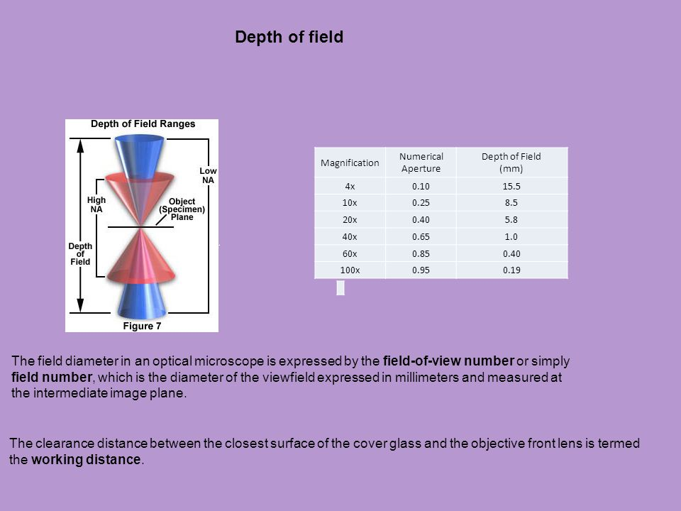 Depth of field Magnification. Numerical Aperture. Depth of Field (mm) 4x. 0.10. 15.5. 10x. 0.25.