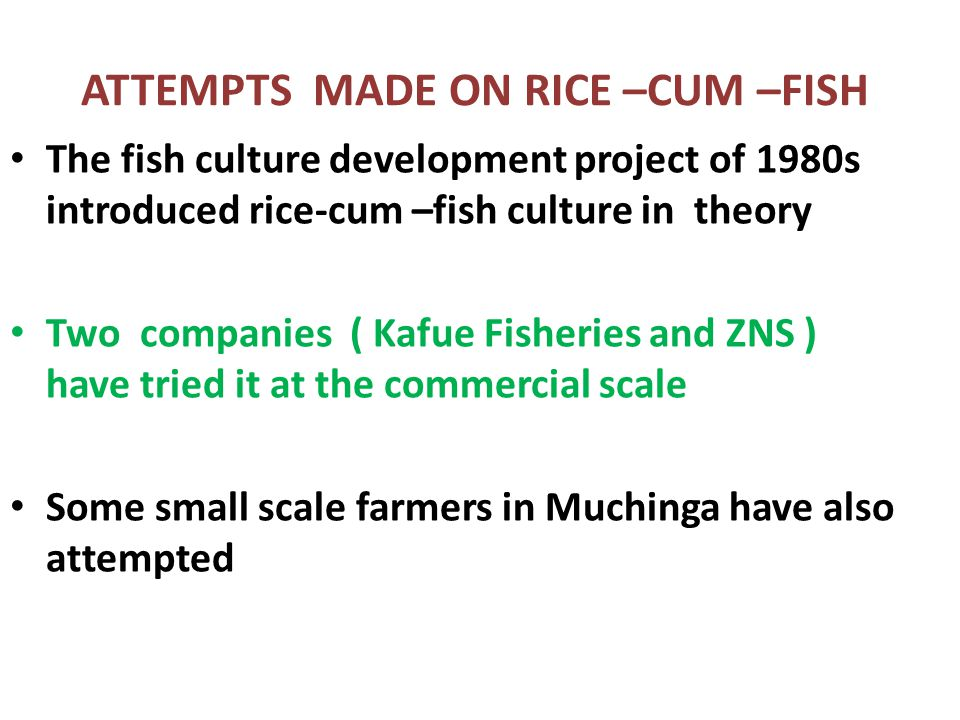 ATTEMPTS MADE ON RICE –CUM –FISH