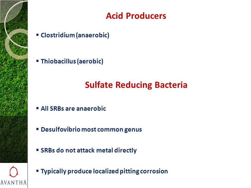 Sulfate Reducing Bacteria