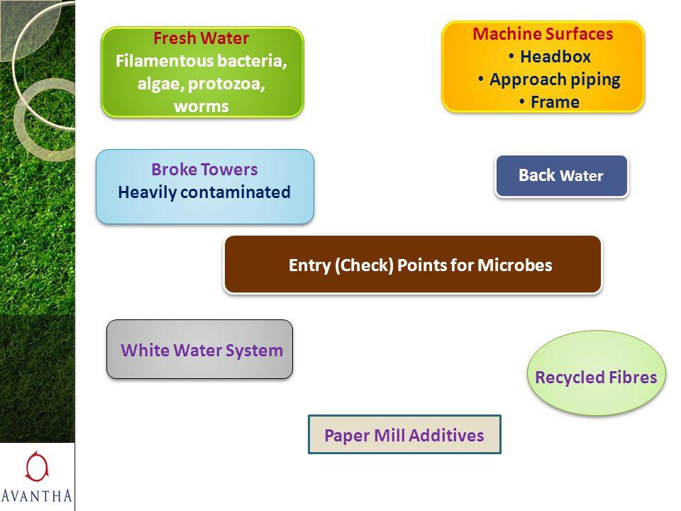 Filamentous bacteria, algae, protozoa, worms